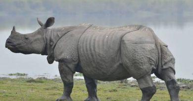 populacja nosorożców