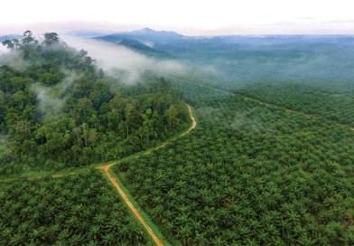 Sri Lanka zakazała importu oleju palmowego oraz likwiduje krajowe plantacje