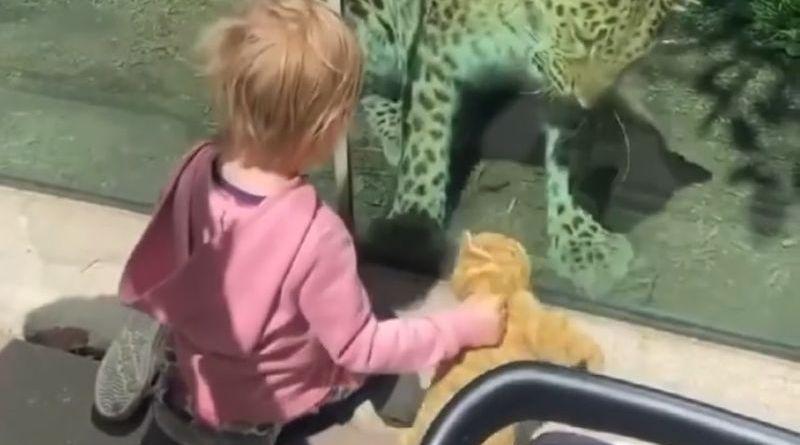 dziecko bawi się z młodym lampartem