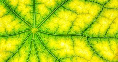 Udało się rozwikłać jedną z zagadek fotosyntezy