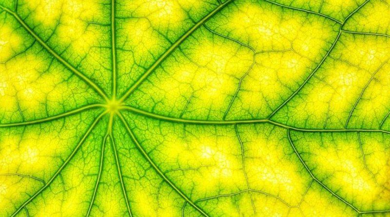 fotosyntezy