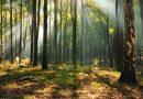 Wstrzymano fatalny projekt nowelizacji ustawy o lasach
