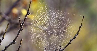 sieć pająka