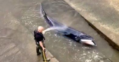 Ratownicy ocalili wieloryba