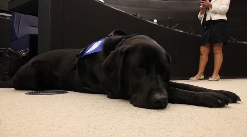 Pies wspiera ofiary przestępstw