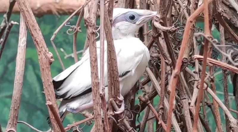 najrzadszy ptak