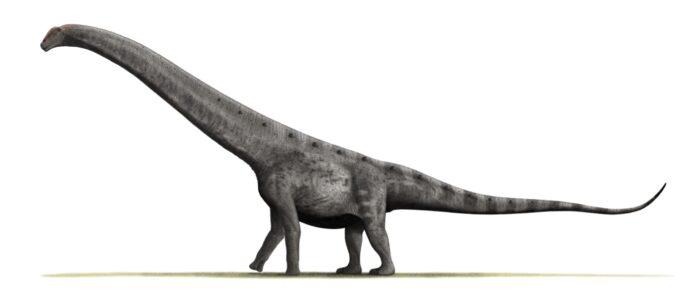 największe zwierzę