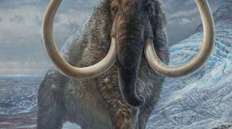 wędrówki mamutów