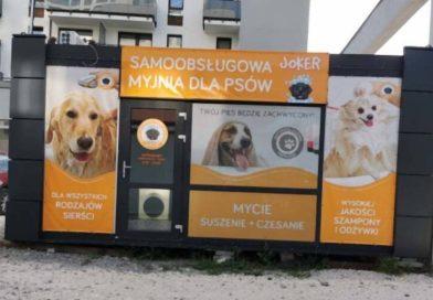 Polak otworzył samoobsługową myjnię dla psów