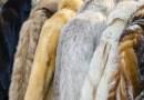 Ostatnie domy mody wycofują z kolekcji naturalne futra