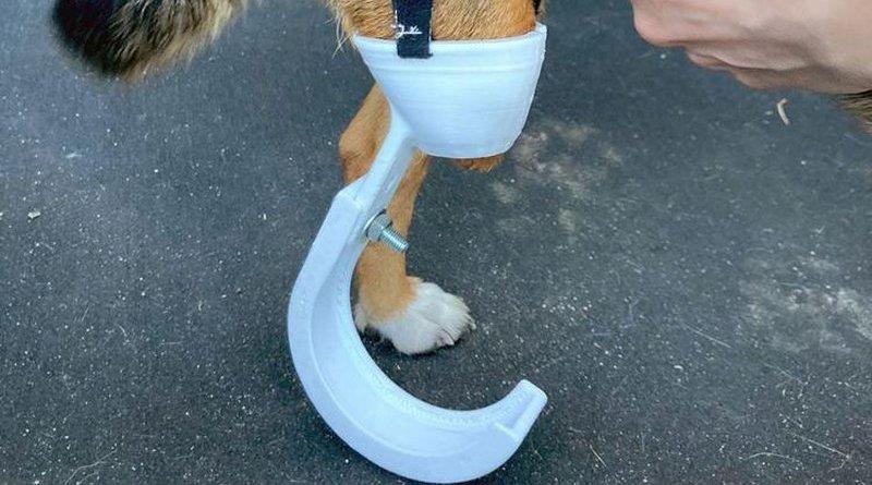 protezy dla okaleczonych psów