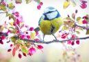 Śpiew ptaków pomaga nam przestawić mózg na wyższy poziom