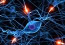 Kora mózgowa formuje się przez trening muzyczny
