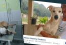 Brazylijczyk ratuje umierające na ulicy zwierzęta