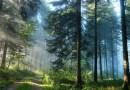 Leczniczy spacer po lesie