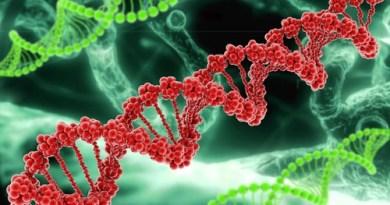 Genetycy znaleźli sposób na zwiększenie długości życia ludzkiego do 800 lat