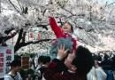Hanami –  japoński zwyczaj podziwiania urody kwiatów wiśni