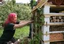 W Warszawie powstał pierwszy hotel dla pszczół
