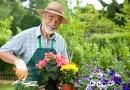 Czy ogrodnictwo czyni człowieka szczęśliwym?