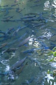 Jaskinia z rybami_Tajskie Karmie rozmiar XXL