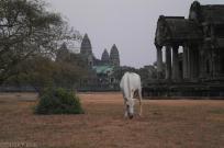 Angkor Wat o zachodzie slonca (4)