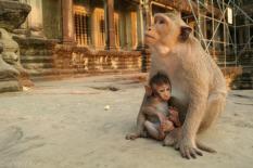 Angkor Wat o zachodzie slonca (7)
