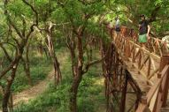 Las mangrowy (3)
