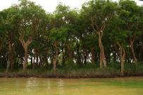 Las mangrowy