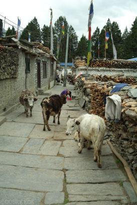 Codzienne zycie mieszkancow Nepalu (15)