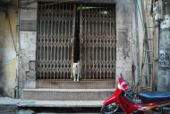 Pies w Ha Noi