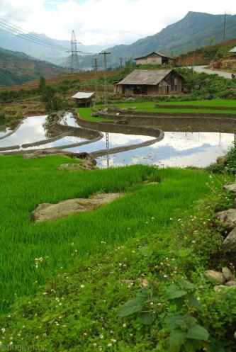 Tarasy ryzowe wokol Sapy Wietnam (16)