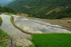 Tarasy ryzowe wokol Sapy Wietnam (17)