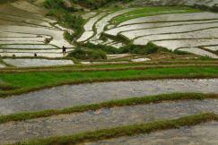 Tarasy ryzowe wokol Sapy Wietnam (21)