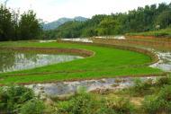 Tarasy ryzowe wokol Sapy Wietnam (35)