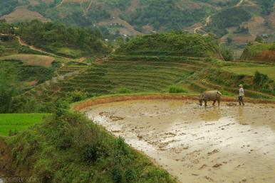 Tarasy ryzowe wokol Sapy Wietnam (4)