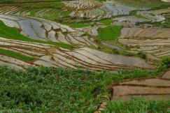 Tarasy ryzowe wokol Sapy Wietnam (8)
