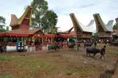 Tana Toraja Ceremonia pogrzebowa_Indonezja (24)