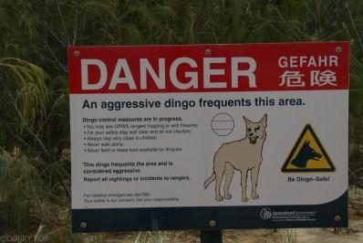 Ostrzezenia przed dzikimi psami Dingo