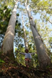 Roslinnosc na Fraser Island (2)