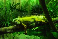 Zoo Sydney (11)