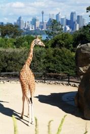 Zoo Sydney (12)