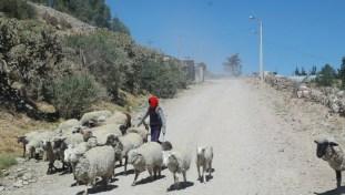 Droga do Kanionu Colca (7)