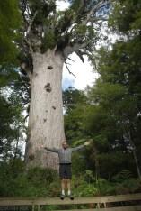 Wielkie i stare drzewa Kauri