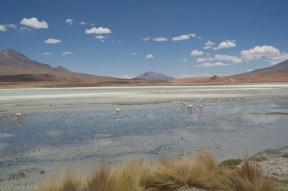 Laguna na pustyni w Boliwii (8)