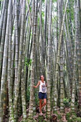 Ogrody botaniczne Rio de Janeiro (6)