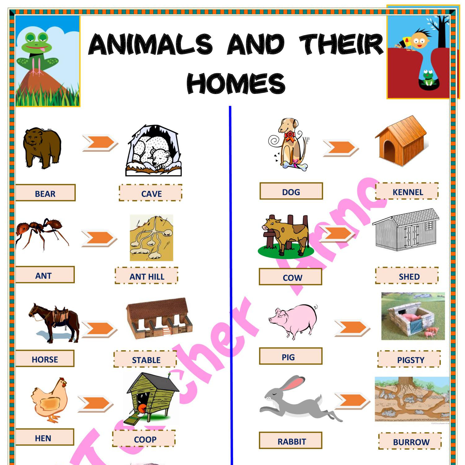 Animals And Their Home