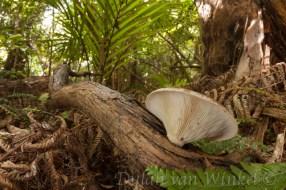 Hauturu coastal forest floor. Photo © Dylan van Winkel.