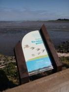 Bar-tailed godwit sign.