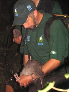 Rogan releasing a kiwi on Kapiti Island. Photo: Herb Christophers.