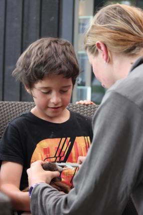 Ranger Jenny Hayward measuring the kiwi chick bill. Photo: Sian Moffitt.